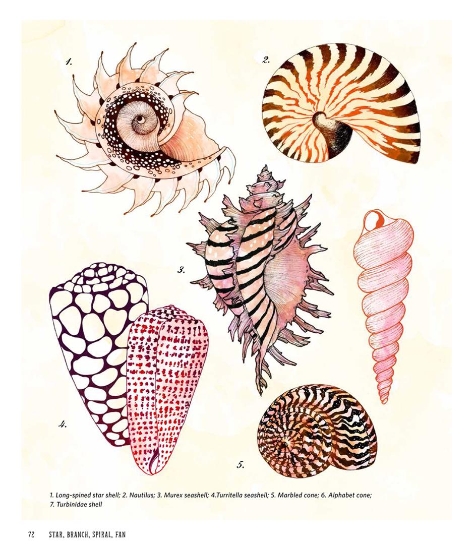 Yellena James SBSP Shells